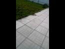 Мой пёс тарзан