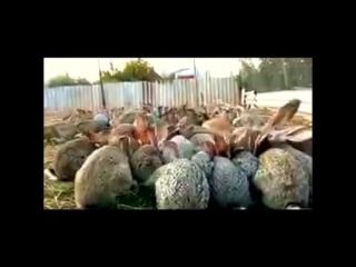Прикол с кроликами