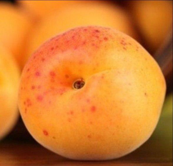 дыни и персики при сахарном диабете
