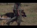 Охота на Вервольфа (2 серия)