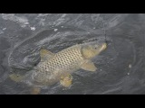 Супер рыбалка на сазана на водохранилище! коропа гиганты!