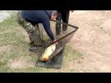 Рыбалка на карпа и сазана! 10 кг счастья в подсаке!