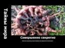 Чукотские пришельцы.Странная форма жизни. неразгаданные тайны мира великое переселение народов