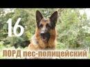 Сериал ЛОРД пес полицейский 16 серия смотреть онлайн