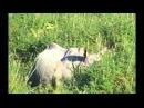 Неизвестное об Известном - Бог Ганеш и слоны Индии выпуск 31 - 3.05.2015