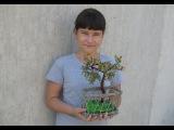Бисероплетение Как сделать дерево из бисера мастер класс яблоня Подарки Поделки Идеи рукоделия
