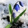 Возвращение весны