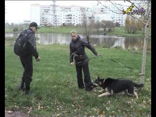 Собака для охраны ЗКС бурбуль овчарка малинуа корсо