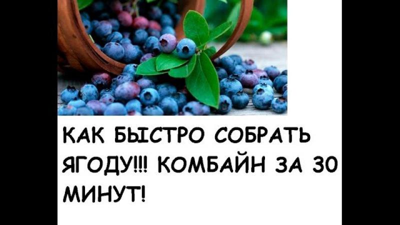 DIY-Стакан-комбайн для сбора ягод своими руками Glassful -harvester for picking berries