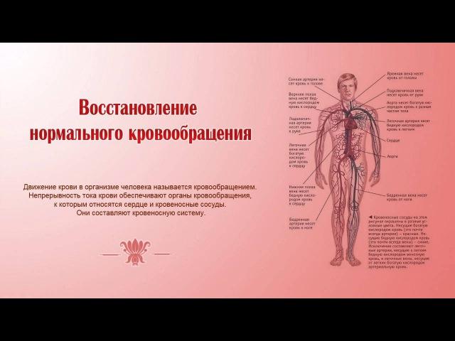 Восстановление нормального кровообращения. Stimulate Normalized Blood Circulation