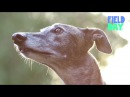 Greyhound Dogs: The Second Race | The Brothers Riedell Have A Field Day