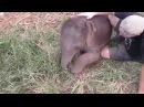 Baby Elephants love to cuddle