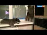 Вечеринка енотов (полная версия) Прикол юмор ржач смешное видео