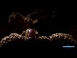 Термиты против муравьев Сиафу