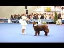 Танцы с собаками фристайл. Выставка Евразия-2012, Москва. Танец куклы и собаки
