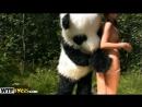 Tera Wild sex to award a hero panda 2012