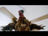 Схватка с петухом-фрагмент из фильма