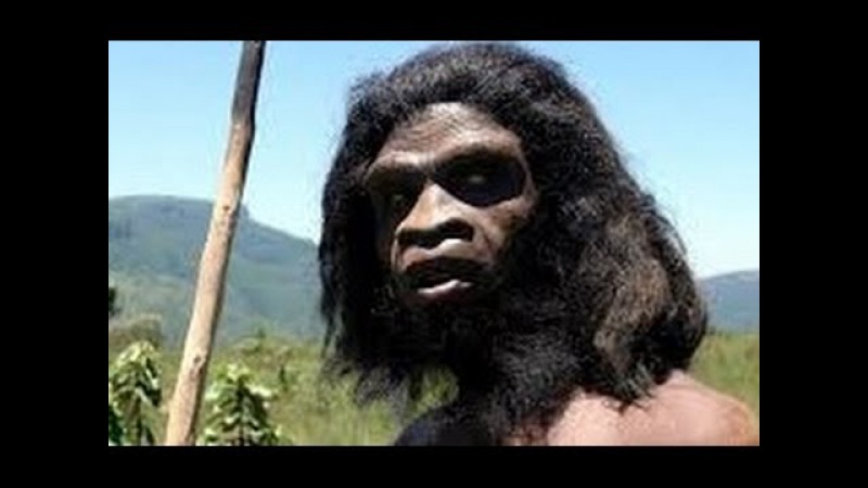 Ape To Man Evolution Documentary History Channel