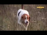 Охота на зайца (продолжение) Про охоту и охотников с Валерием Кузенковым