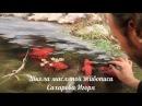 НОВЫЕ ВИДЕОУРОКИ Художник Игорь Сахаров Рисуем рыбок кои в прозрачной воде