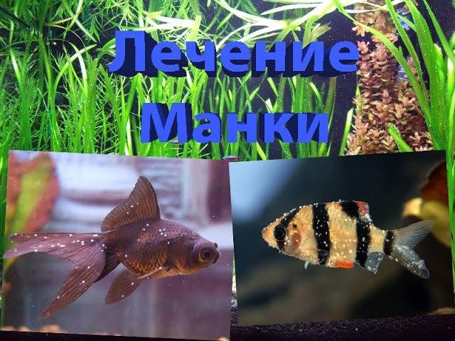 Лечение Манки у Аквариумных рыб, ИХТИОФТИРИОЗ / The Monkey treatment in Aquarium fish, ICK