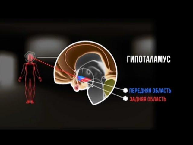 Шифры нашего тела. Неизвестные органы. Гипоталамус. Гипофиз. Эпифиз. Познаватель...