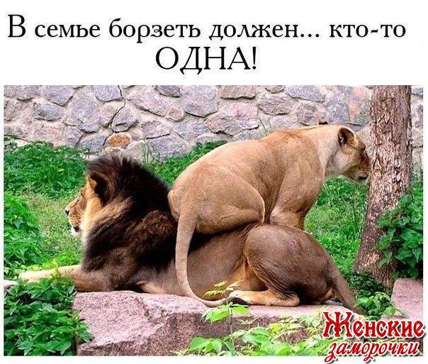 http://cs630431.vk.me/v630431510/28abd/2HuRO9sDQ24.jpg
