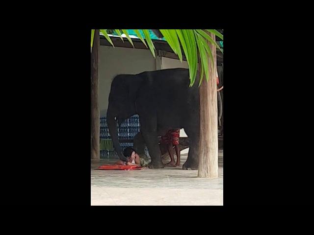 Слоновий массаж на острове Ко Чанг