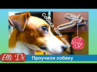 Подстава для собаки! Воспитание щенка с Elli Di. Собака одна дома - проблема?