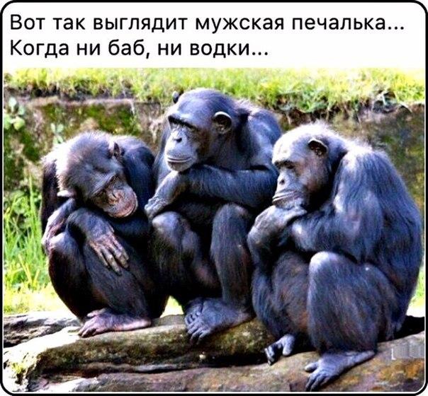 Живи С Юмором (Приколы, прикольные ...: vk.com/cmex_pu