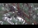 ✽ Околдован лес стоит Андраник саксофон Медленная