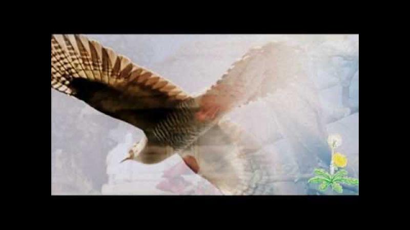 Сива зозуленько Українська народна пісня