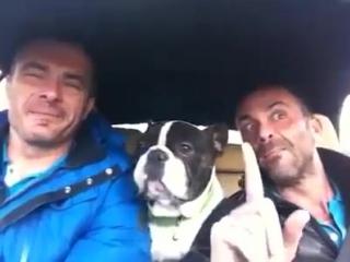 Dog sing You raise me up (long version) bulldog