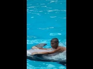 Дельфинарий Джубга 2016 год