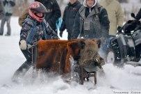 09 января 2016 - Самарская область: 12й международный мотослет SNOWDOGS