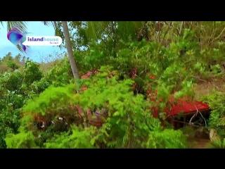 Island house for rent острова самуи тао панган