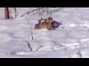 Pierwsza zima, pierwszy śnieg w życiu szczeniaczków.
