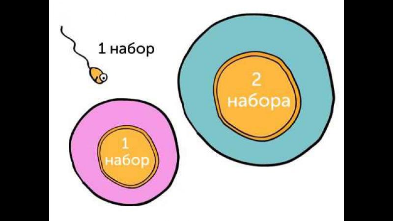 Генетика 101, часть 3 откуда берутся ваши гены utytnbrf 101, xfcnm 3 jnrelf ,thencz dfib utys