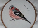 1. Transferring the Design in Hand Embroidery. How to Stitch a Chaffinch. Craft Jitsu Online Class