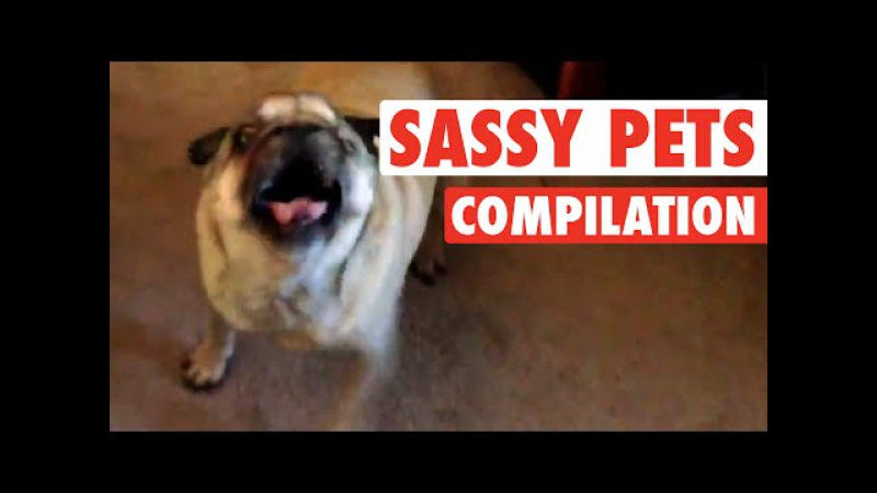 World's Funniest Sassy Pets (Funny Compilation!)