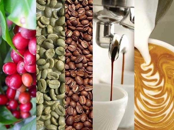 Шлях кави від плантації до