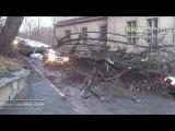 Упало дерево на Такси во Львове 30 ноября 2015 в 15:56 есть пострадавшие | ДТП авария