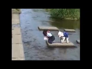 Обезьянья переправа - Видео из +100500