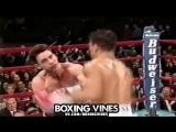 A R T U R O   G A T T I   (Boxing Vines)   vk.com/boxingvines