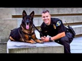 Police Dog Shot in Line of Duty Reunited with Cop Good Morning America ABC News