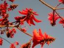 Весенний солнечный день 3, экзотические деревья и цветы, Андалусия, 01/03/2016