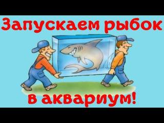Как правильно пересаживать аквариумных рыбок в аквариум после покупки! [#Аквариумные рыбки]