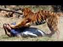 Ярость зверя... Нападения животных на человека
