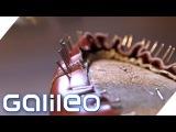 Deutsche Schuhmacherin in Florenz   Galileo   ProSieben