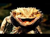 Безжалостный хищник/Ядовитые животные/Необычные и странные животные/Мутация/Планета мутантов